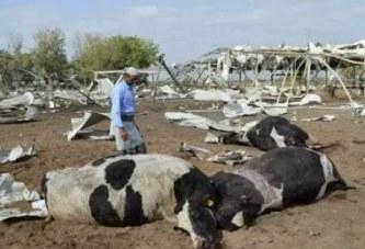 العدوان يقصف مزارع اخوان ثابت